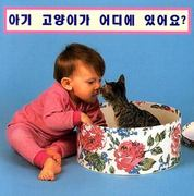 Where's the Kitten? (Korean) 0 9781932065787 1932065784