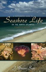 A Photographic Guide to Seashore Life in the North Atlantic 1st Edition 9780691133195 0691133190