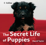 The Secret Life of Puppies 0 9780007263615 0007263619
