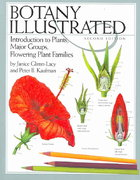 Botany Illustrated 2nd edition 9780387288703 0387288708
