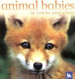 Animal Babies in Towns and Cities 0 9780753458419 0753458411