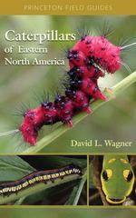 Caterpillars of Eastern North America 0 9780691121444 0691121443