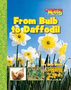 From Bulb to Daffodil 0 9780531187876 053118787X