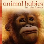 Animal Babies in Rain Forests 0 9780753460603 0753460602