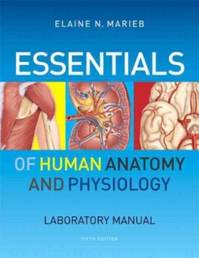 essentials of human anatomy physiology laboratory manual 5th rh chegg com human anatomy and physiology laboratory manual elaine n marieb human anatomy & physiology laboratory manual marieb pdf